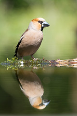 Photo Blinds Nature appel vink