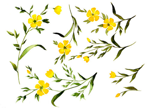 Yellow watercolor flower branches collection isolated