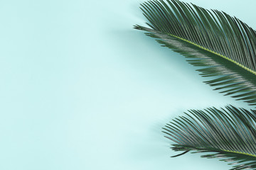 Summer composition. Palm leaves on pastel blue background. Summer concept. Flat lay, top view, copy space