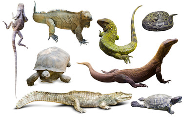 Wall Mural - set of reptiles isolated