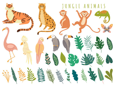Jungle wild animal and exotic bird with exotic tropical leaves. Set with Isolated vector of tiger, monkey, leopard, chameleon, cockatoo, flamingos, parrot, cockatoo, toucan. Cartoon illustration