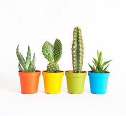 lot of cacti in colorful pots. White background. Decor for child's room. Advertising.