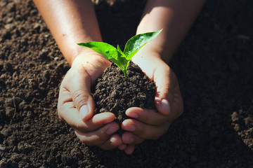 Wall Mural - hand holding young tree for planting. concept eco earth day