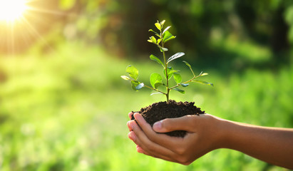 Fototapeta eco earth day concept. hand holding young plant in sunshine and green nature background obraz