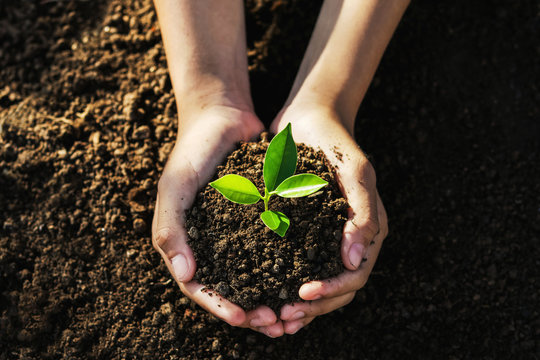 hand holding young tree for planting. concept eco earth day