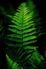 Bright fern leaves in low key contrast