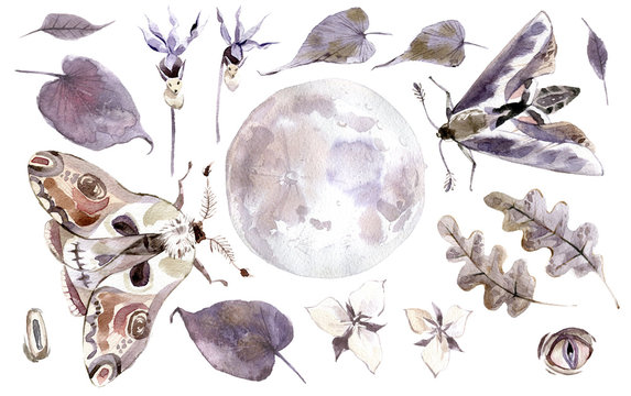 Watercolor mystical collection. Moon, moths, leaves and plants.