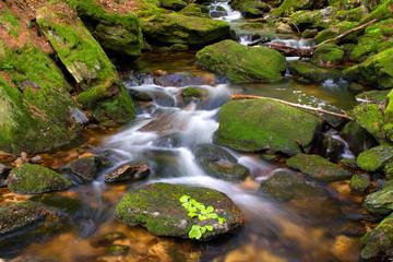 Bayerischer Wald, Sagwasser, Bach, Deutschland