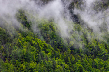 Fotobehang Bossen Beautiful, green and healthy forests help regulate global climate.