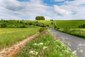 Wall Mural - The white horse on Hackpen Hill in Wiltshire