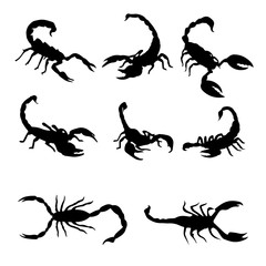 Isolated scorpions on the white background.  Scorpions silhouettes. Vector EPS 10.