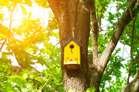 tree house for birds on the tree, birdhouse from the tree for wintering birds