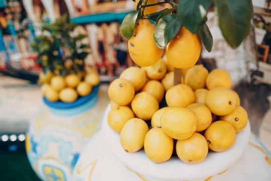 Lemon tree and lemons in a pot