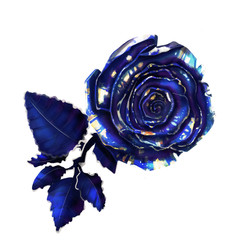Isolated illustration with blue rose, realistic decorative image