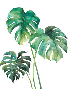Watercolor tropical leaves poster. Hand painted exotic green branches isolated on white background. Summer plants illustration