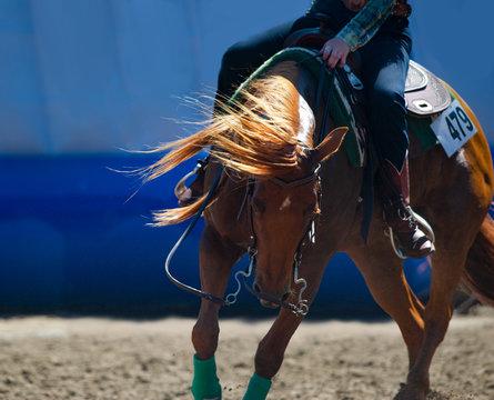 chestnut quarter horse closeup under the saddle in backlight