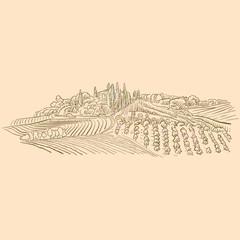 Foto auf Acrylglas Beige Vineyard Landscape drawing