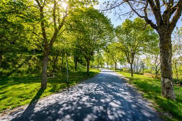 Tree path at Lautrec village