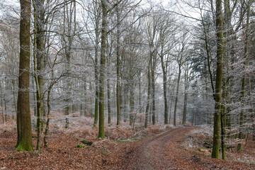 Waldweg und Raureif
