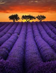 Lavender - Valensole