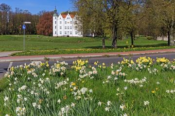 Narzissen im Frühling auf einer Verkehrsinsel in Ahrensburg Schleswig-Holstein, Deutschland. Mit Schloss Ahrensburg und dem Schlosspark.