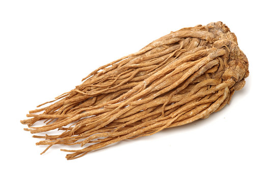 Angelica root used in chinese traditional herbal medicine, over white background. Radix angelicae sinensis