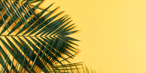 Photo sur Plexiglas Palmier Summer modern composition.Tropical green leaves of palm tree on pastel yellow background. Flat lay, top view, copy space