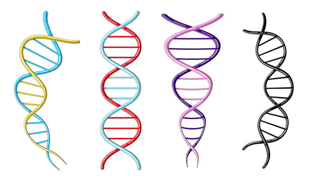 A set of four multicolored beautiful medical scientific twisted structures of spirals of abstract models of DNA genes on a white background. Vector illustration