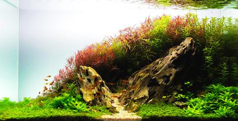 nature style aquarium tank with aquatic plants