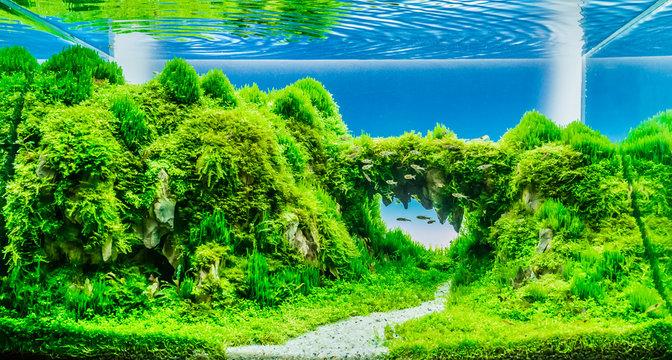 nature style aquarium tank with dragon stone .