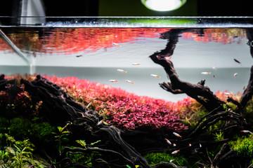 nature style aquarium tank with a variety  aquatic plants.