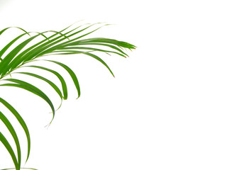 Tropical palm leaf on white background Wall mural