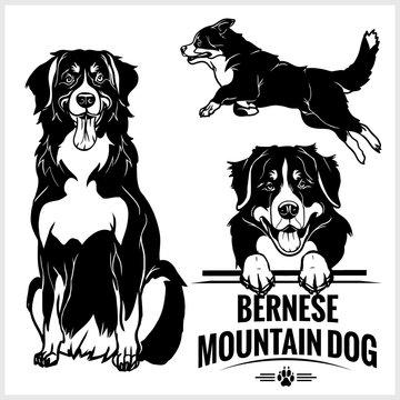 Bernese Mountain Dog - vector set isolated illustration on white background