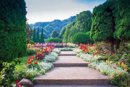 Mountain flower garden in Thailand