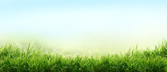 Lush spring green grass background with a summer blue sky over fields and pastures.
