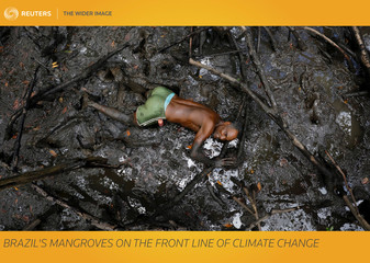 The Wider Image: Brazil's mangroves on the front line of climate change