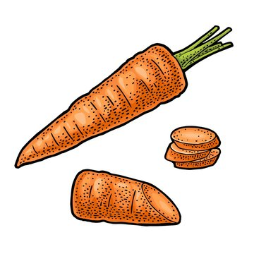 Carrots whole, half and slice. Vector color vintage engraving