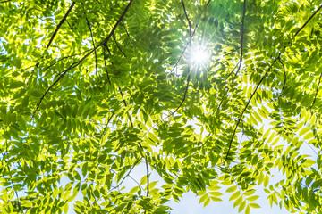 瑞々しい新緑の木