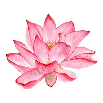 Wtercolor tropical flower lotus