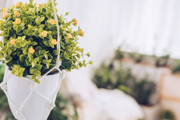 selective focus of lush plant in white flowerpot hanging on ropes