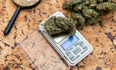 weighing marijuana buds on a scale. Fresh cannabis harvest