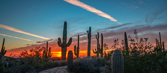 Photo sur Aluminium Cactus AZ Desert Landscape Image At Sunset