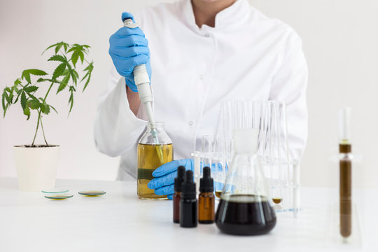 Watering cannabis plants in the laboratory.