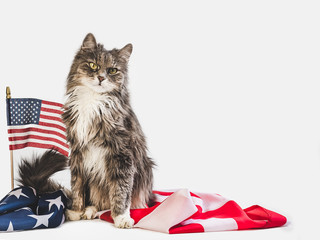 Cute, charming kitten and American Flag on a white, isolated background. Close-up, side view. Studio photo shoot. Preparation for the national holiday. Congratulations for family, friends, colleagues