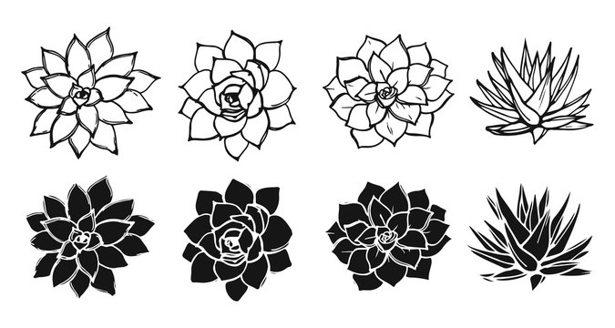 Drawing succulents plant collection. Black and white shapes and silhouettes of succulents.