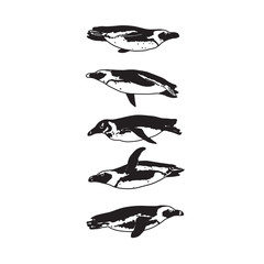 Drawing swimming penguin silhouettes. Black and white isolated penguins birds.