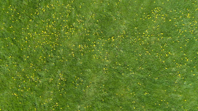 Art abstract spring or summer background with green grass and Yellow flowers.