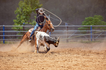 Calf Roping Competition At An Australian Rodeo Fototapete