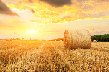 Fototapeta Round straw bales on farmland obraz