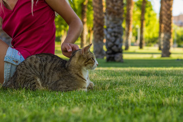 animal shelter concept photography of calming sitting with domestic cat by young girl in park outdoor green environment for walking with pets, copy space